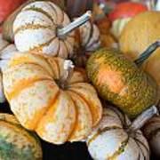 Pumpkins On Pumpkin Patch Art Print