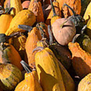 Pumpkins Up Close Art Print
