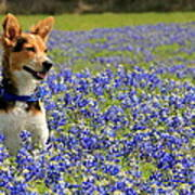 Pup In The Bluebonnets Art Print