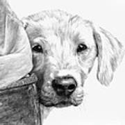 Puppies And Wellies Art Print by Sheona Hamilton-Grant