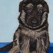 Puppy - German Shepherd Art Print