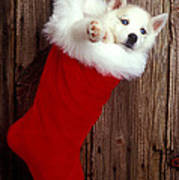 Puppy In Christmas Stocking Art Print