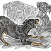 Puppy Love - Doberman Pinscher Pup - Color Tinted Art Print
