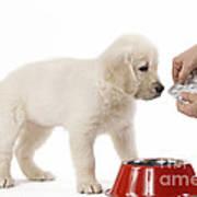 Puppy Receiving Medicine Art Print