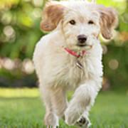 Puppy Running Through The Grass Art Print