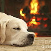 Puppy Sleeping By The Fireplace Art Print by Diane Diederich