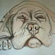 Puppy Sleeping Art Print
