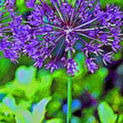 Purple Allium Flower Art Print
