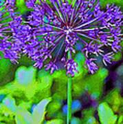 Purple Allium Flower Art Print