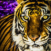 Purple And Gold Tiger Art Print