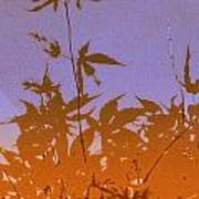 Purple And Orange Haiku Art Print