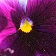 Purple And Pollen Art Print