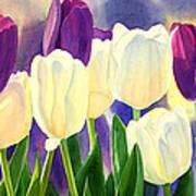 Purple And White Tulips Art Print