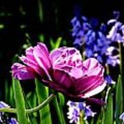 Purple Beauty Art Print