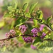 Purple Berries Art Print