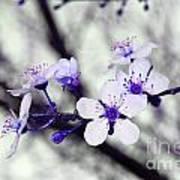 Purple Blossoms Art Print