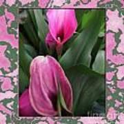 Purple Calla Lilies Art Print