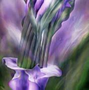 Purple Callas In Calla Vase Art Print