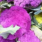 Purple Cauliflower Art Print