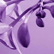 Purple Charm Art Print