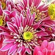 Purple Chrysanthemum Art Print