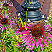 Purple Coneflowers By Former Railroad Depot In Pipestone-minnesota Art Print