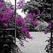 Purple Entrance Art Print