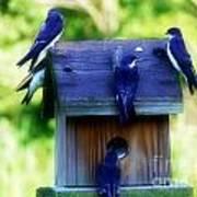Purple Finch 2 Art Print