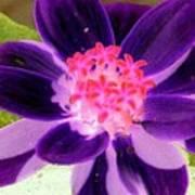 Purple Flower - Photopower 257 Art Print