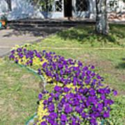 Purple Flowerbed Art Print