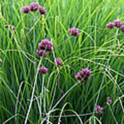 Purple Flowers And Grasses Art Print