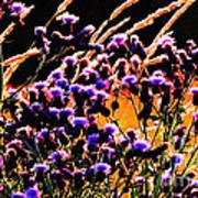 Purple Glory Art Print