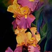 Purple Gold Irises  Art Print
