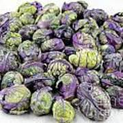 Purple Green Brussels Sprouts Art Print