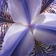 Purple Iris Inside Art Print