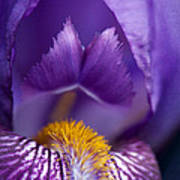 Purple Iris Macro Textured 1 Art Print