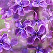 Purple Lilacs Art Print