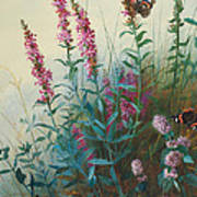 Purple Loosestrife And Watermind Art Print