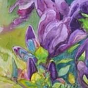 Purple Magnolia Art Print