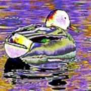 Purple Mallard Art Print