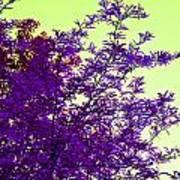 Purple Morning Art Print