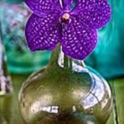 Purple Orchid In Vase Art Print