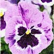 Purple Pansy Close Up - Digital Paint Art Print