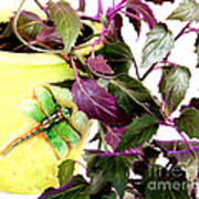 Purple Passion And Dragonfly Pot Art Print