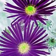Purple Passion - Photopower 1604 Art Print
