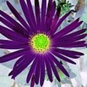 Purple Passion - Photopower 1605 Art Print