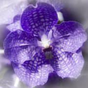 Purple Perfection Art Print