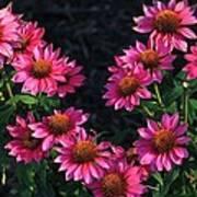 Purple Pow Echinacea  Art Print