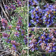 Purple Sage Collage Art Print