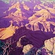 Purple Splendor Art Print